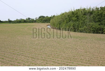 Field Cultivated In The Padana Plain In Italy