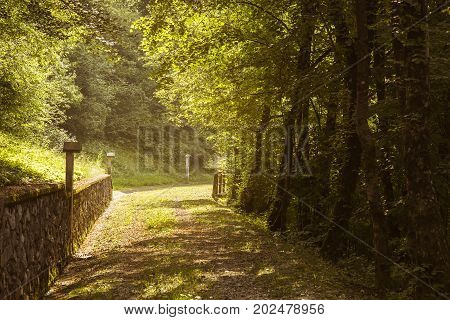 A path between trees with a small stone wall and a warm afternoon tone.