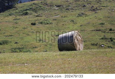 Rolled Hay Bale
