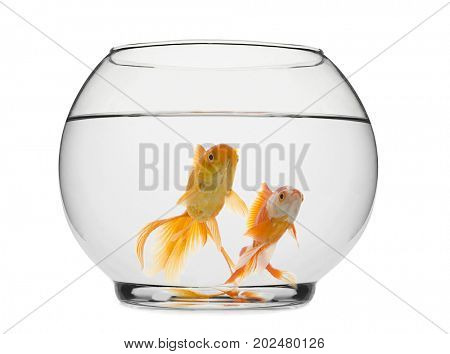 Goldfishes in fishbowl isolated on white background.