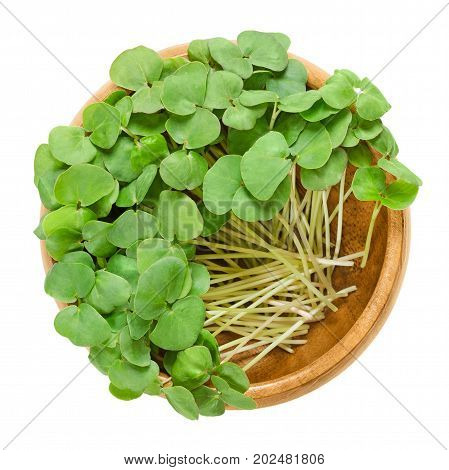 Buckwheat microgreens in wooden bowl. Cotyledons of Fagopyrum esculentum, also Japanese or silverhull buckwheat. Young plants, seedlings and sprouts. Macro food photo close up from above over white.