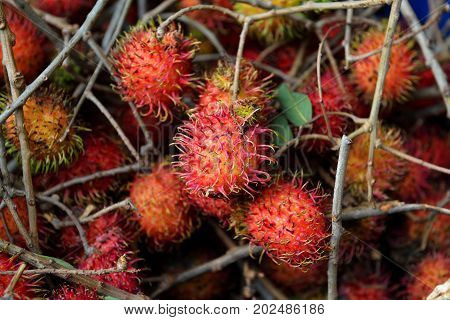 Fresh Rambutan with stems in pile mixed