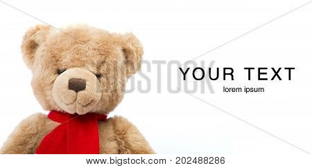 Teddy bear isoalted on white. Copy space