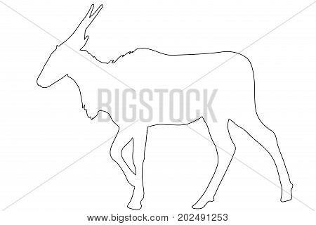Outline of an african eland antelope - digitally handdrawn illustration on white background