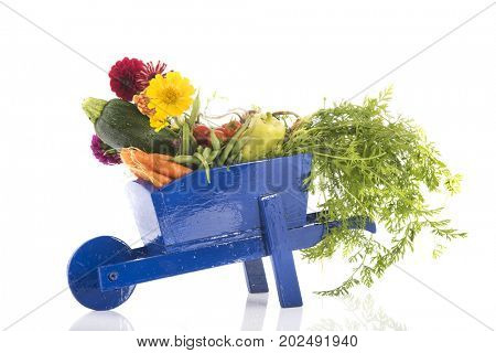 Blue wheel barrow with fresh vegetables