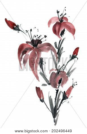 Watercolor and ink illustration of lily flowers. Sumi-e u-sin painting.