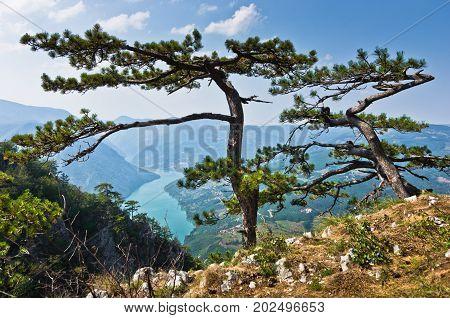 Viewpoint Banjska rock at Tara mountain looking down to Canyon of Drina river in west Serbia