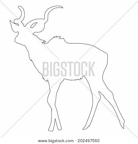 Outline of an african Blue Wildebeest - digitally handdrawn illustration on white background