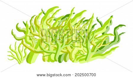 Algae Vector Symbol Icon Design. Beautiful Illustration Isolated On White Background