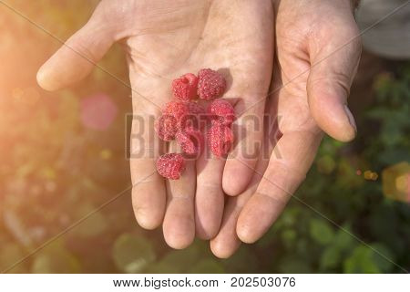 A man is holding raspberries in his hands