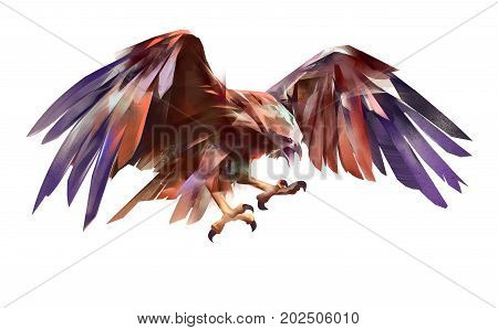 painted flying attacking bird eagle white background