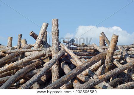 Logs dumping trunks logs in bulk nature