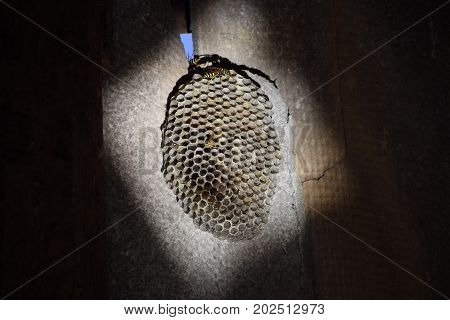 The Nest Is Aspen, Polist. The Aspen Nest At The End Of The Breeding Season