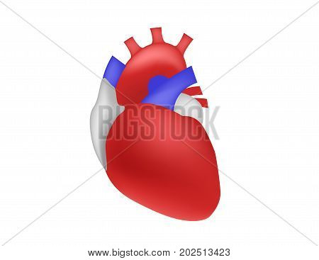 human heart vector on white background .