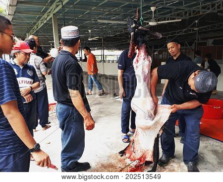 SHAH ALAM SEPTEMBER 1 2017: Butchers peel off the goat's skin to be distributed to all muslims during Eid-ul-Adha or Feast of the Sacrifice or Qurban.