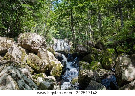 River in beautiful green forest environment. Small river flow among big boulders.