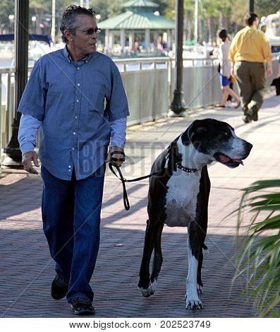 Jacksonville, Florida - November 23, 2013: Man is walking with dog on the street of Jacksonville, Florida