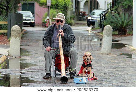 Saint Augustine, Florida - April 20, 2013: Street musician with dog in Saint Augustine, Florida in rainy day