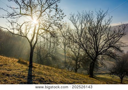 Apple Orchard On Hillside At Autumn Sunrise