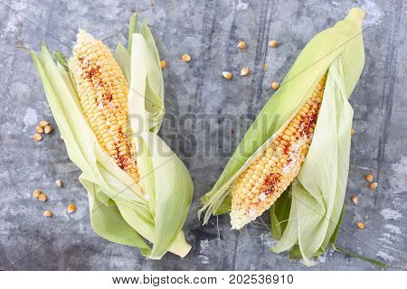 Two cobs of  corn, raw in husks.
