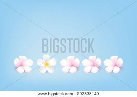 vector beautiful natural style of life, pastel Sweet pink yellow color plumeria flower, frangipani flower soft blue background simplicity illustration spa