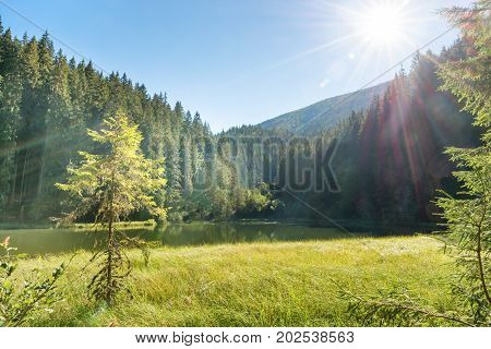 Beautiful Forest Lake In The Mountains