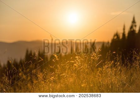 Dry Grass On A Field At Sunset
