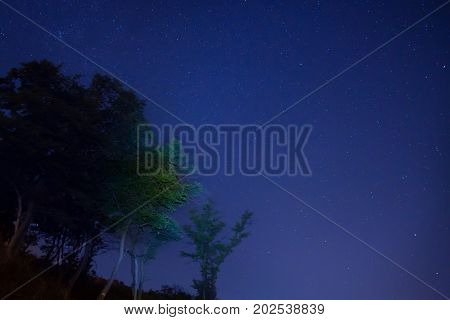Big Green Trees In A Forest Under Blue Dark Sky