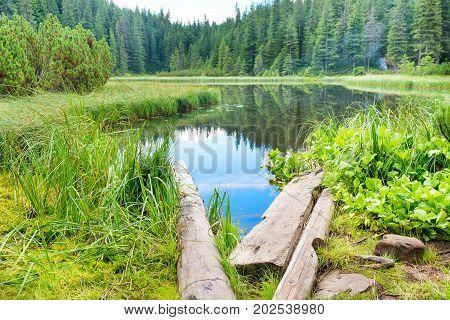 Wooden Bridge In Blue Lake
