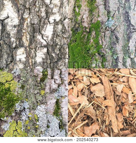 Tree Bark Collection