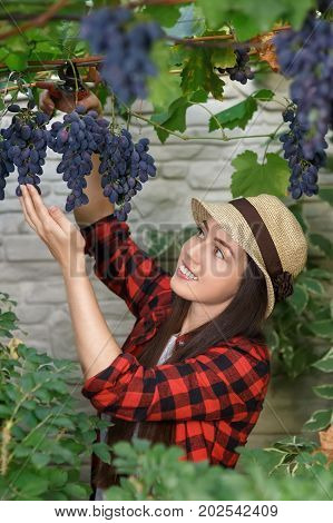 portrait of happy young woman gardener with secateurs picking grape. Girl farmer. Harvesting of grape. Gardening, agriculture, viticulture, harvest concept