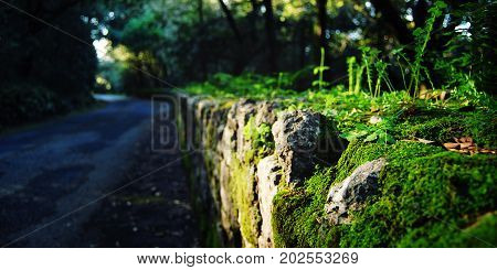 Road Stone Fence Covered In Moss And Grass. Italy.