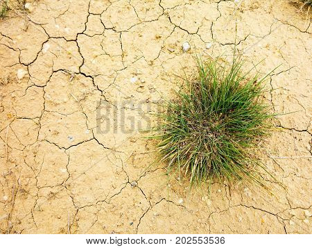 Young Plant Growing Up On Crack Earth, Global Warming Theme Green Grass Rising On Burned Cracked Gro
