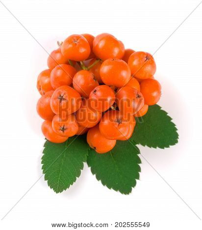 Orange rowan with leaf isolated on white background. Top view.