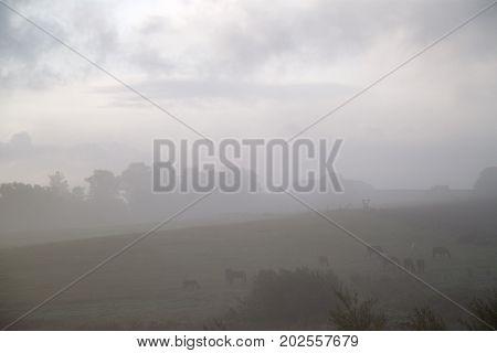 Nebel am Morgen über den Feldern, Norddeutschland