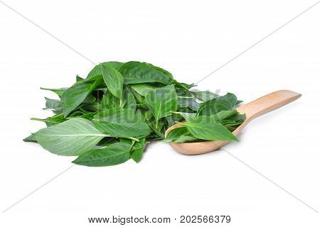 pile of green leaf basil herb in wooden spoon isolted on white background
