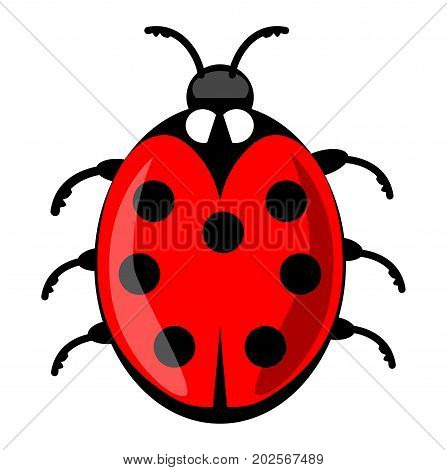 Cute ladybug cartoon isolated on white background. Vector ladybird illustration decorative red beetle with seven dots on his wing case. Vector EPS 10