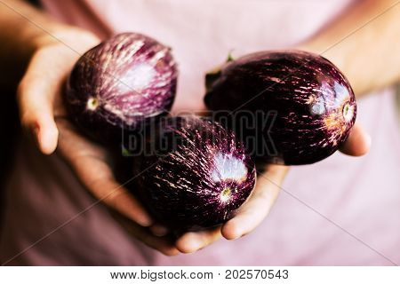 Farming business, agriculture, organic food, diet and healthy food concepts. Fresh organic eggplants in man's hands