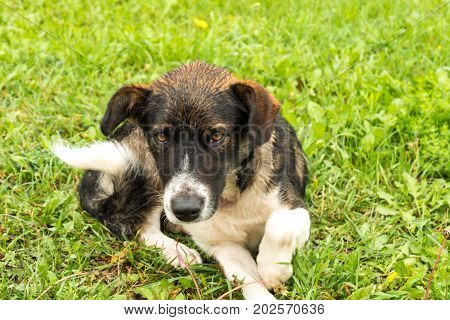 Stray Sick Dogs With Wet Hair Lying On The Grass