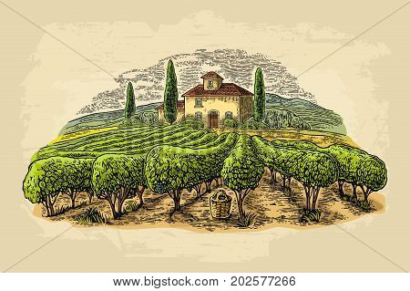 Rural landscape with villa, vineyard fields and hills. Vector color vintage engraving on old paper beige texture background. Hand draw design illustration for label or poster.
