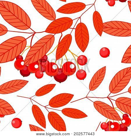 Seamless autumn pattern with red, orange Ashberry leaves and berries on a white background. Vector.