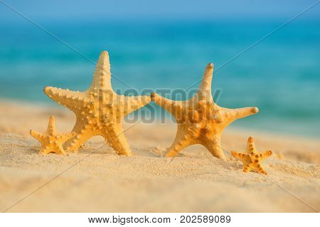 A family of sea stars rests on the sea.