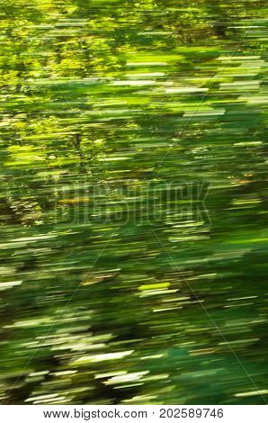 Blur of greenery while running fast through the forest, Semenic national park, west Romania