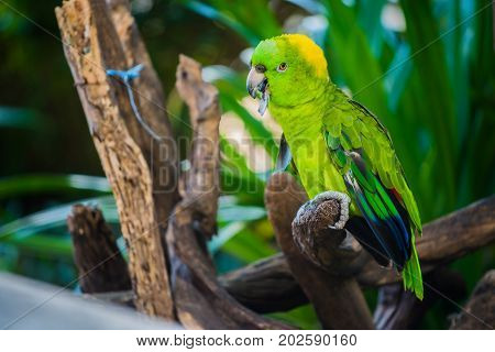 Parrot in the garden, lovely bird animal and pet
