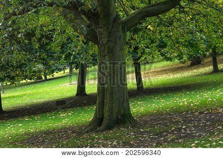 trees in the park of edinburgh in scotland