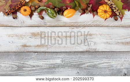 Autumn foliage with gourds corns and acorns for Thanksgiving and fall holidays. Top border background with plenty of copy space