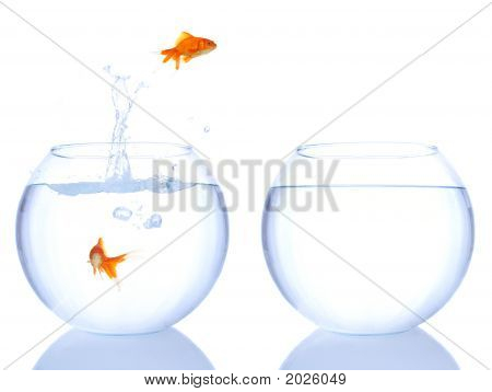 Goldfishes Jumping