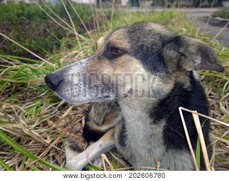 Side view of the head of a stray dog lying on a flower bed