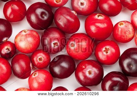 Wild cranberries color shape variation. Red ripe berries macro view. copy space. up view, studio photo.