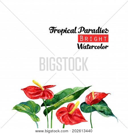 Watercolor background with tropical red calla and leaves. Can be used for invitations greeting cards.